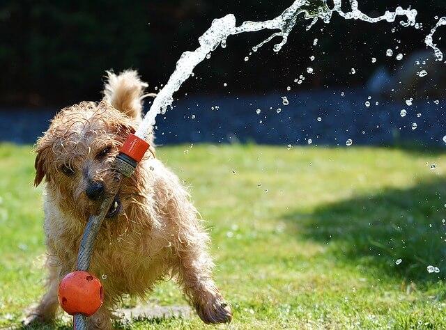 ホースで遊ぶ犬の写真
