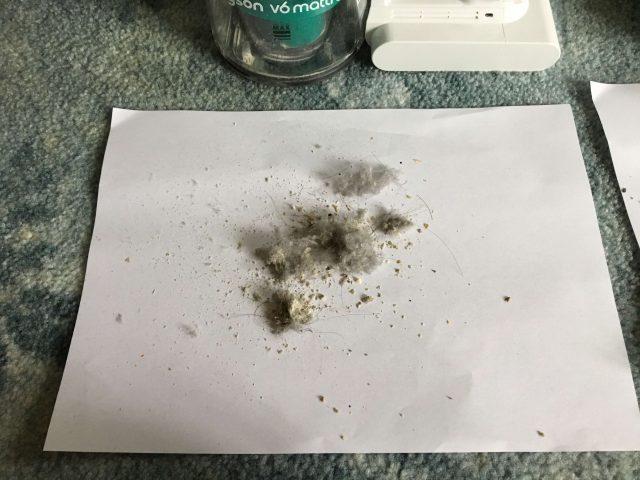 ダイソンマットレス+1回目の掃除結果の写真