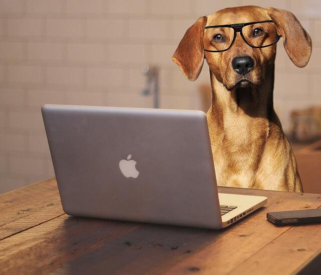 犬とパソコンの写真